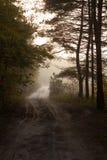 Estrada secundária através da floresta outonal na manhã floresta e árvores ucranianas na névoa e na névoa Imagens de Stock Royalty Free