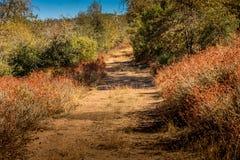 Estrada secundária coberto de vegetação limitada pelo trigo mourisco da planta nativa, costa fotos de stock royalty free
