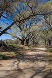 Estrada secundária com árvores Imagem de Stock Royalty Free