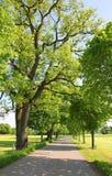 Estrada secundária com as árvores emergentes frescas na primavera Imagem de Stock Royalty Free