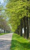 Estrada secundária com das árvores começo avante - da mola Imagens de Stock Royalty Free