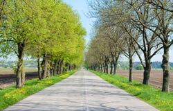 Estrada secundária com das árvores começo avante - da mola Foto de Stock