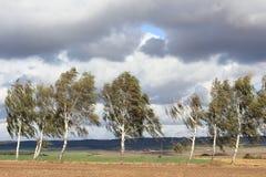 Estrada secundária com os vidoeiros no outono imagem de stock