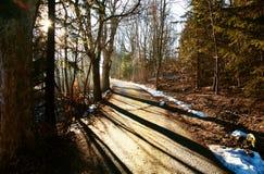 Estrada secundária e árvores Imagens de Stock Royalty Free
