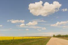 Estrada secundária e um campo do Canola imagens de stock