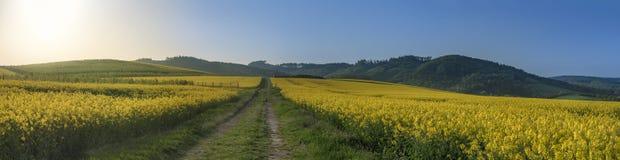 Estrada secundária em campos amarelos da colza Imagens de Stock