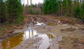 Estrada secundária em uma floresta selvagem imagem de stock royalty free
