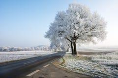 Estrada secundária em uma paisagem do inverno com árvores geadas Imagens de Stock Royalty Free