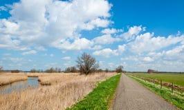 Estrada secundária estreita em uma reserva de natureza holandesa Imagens de Stock Royalty Free