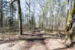 Estrada secundária na floresta Foto de Stock Royalty Free