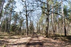 Estrada secundária na floresta Fotografia de Stock Royalty Free