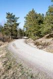 Estrada secundária na floresta Fotos de Stock Royalty Free