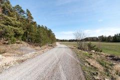 Estrada secundária na floresta Imagens de Stock Royalty Free