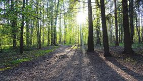 Estrada secundária na floresta bonita da mola Foto de Stock Royalty Free