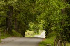 Estrada secundária nas madeiras fotografia de stock