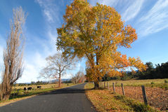 Estrada secundária no outono Fotos de Stock