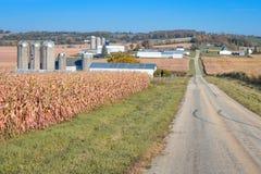 Estrada secundária que atravessa campos de exploração agrícola fotos de stock royalty free