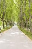 Estrada sob árvores fotos de stock royalty free