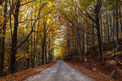 Estrada sob as árvores no outono Fotos de Stock Royalty Free