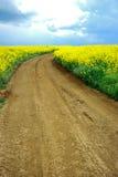 Estrada sobre o campo amarelo imagens de stock royalty free