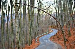 Estrada solitária Foto de Stock