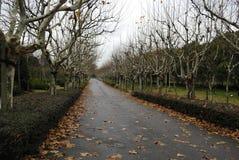 Estrada solitária das árvores de Phoenix Imagens de Stock Royalty Free
