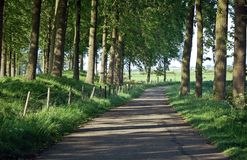 Estrada sombrio sob árvores Fotografia de Stock