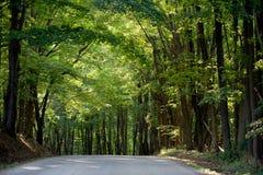 Estrada Sunlit Fotos de Stock