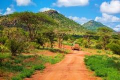 Estrada à terra vermelha, arbusto com savanna. Tsavo ocidental, Kenya, África Imagem de Stock