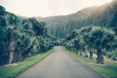 Estrada tropical do asfalto com palma e montanhas no jardim botânico de Havaí Ho'omaluhia foto de stock royalty free