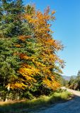 Estrada Ucrânia de Autumn Carpathians Foto de Stock Royalty Free