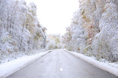 Estrada a uma madeira do inverno. fotos de stock royalty free