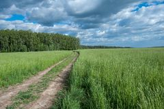 A estrada Unpaved nas colheitas verdes coloca foto de stock royalty free