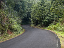 Estrada vazia na floresta Fotografia de Stock