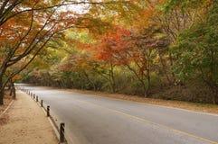 Estrada vazia na floresta durante o outono Fotografia de Stock