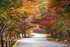 Estrada vazia na floresta durante o outono Foto de Stock Royalty Free