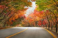 Estrada vazia na floresta durante o outono Imagens de Stock Royalty Free