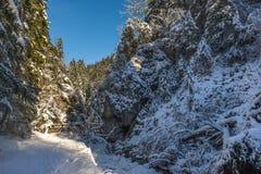 Estrada vazia nevado na floresta conífera no dia de inverno ensolarado Imagem de Stock Royalty Free