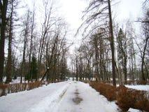 Estrada velha do parque no inverno Imagens de Stock