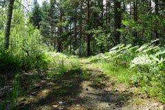 Estrada velha no meio de uma floresta no dia ensolarado imagens de stock
