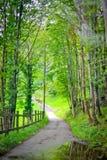 Estrada verde Fotos de Stock Royalty Free