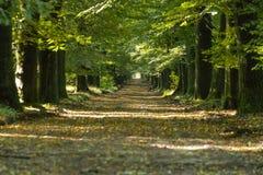 Estrada verde Imagens de Stock