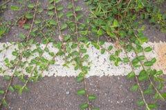 Estrada verde da folha Foto de Stock
