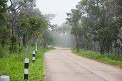 Estradas de floresta e névoa grossa Imagens de Stock