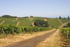 Estradas de terra vermelhas através dos vinhedos fotografia de stock royalty free