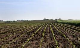 Estradas do milho Imagens de Stock