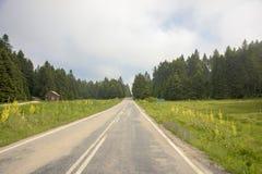 Estradas e árvores verdes Imagem de Stock
