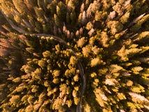 Estradas e árvores fotografia de stock