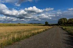 Estradas que conduzem campos de milho passados e árvores altas Imagem de Stock