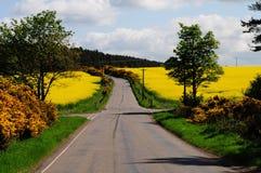 Estradas transversaas Imagens de Stock Royalty Free